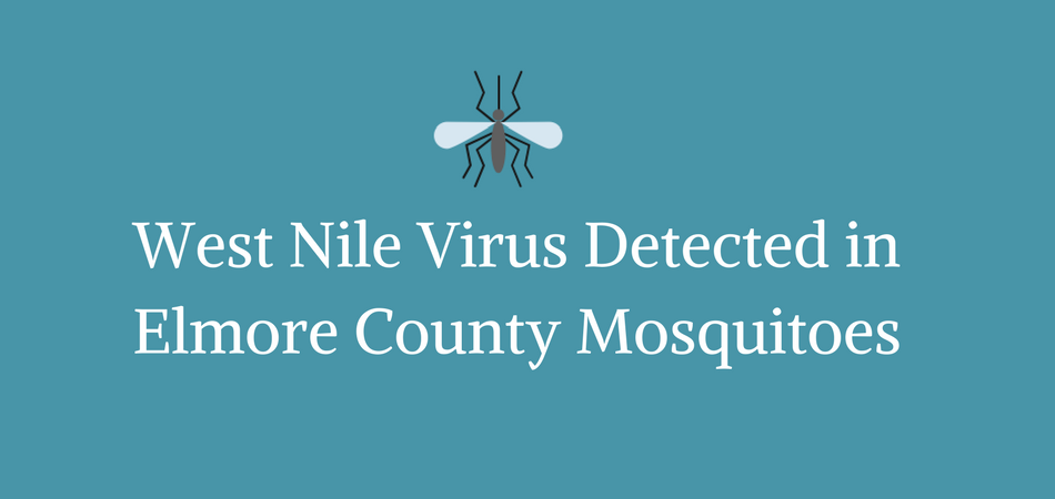 wnv mosquitoes