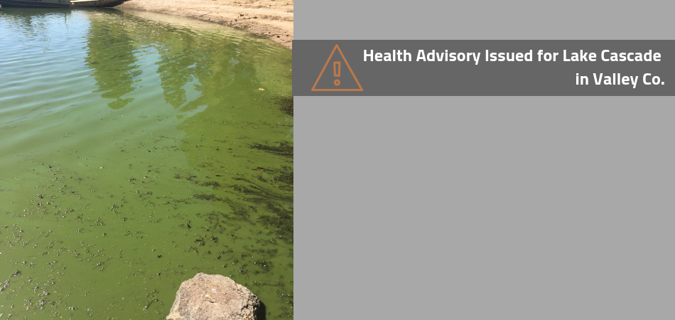 Cyanobacteria Harmful Algal Bloom: Precautions urged